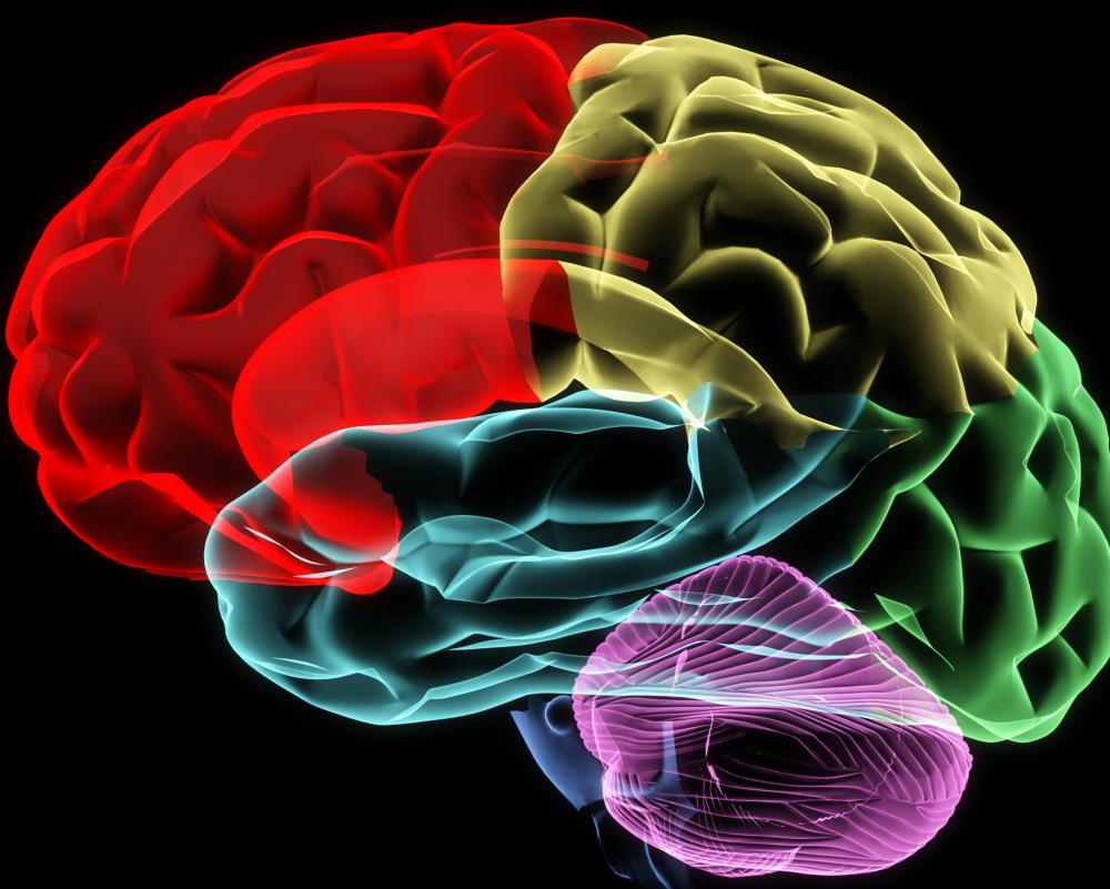vitamins for brain function and memory